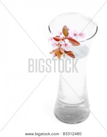New blossoms budding in a large glass vase with white background