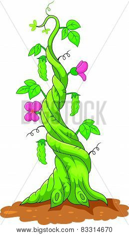Cartoon bean stalk