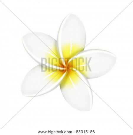 One white frangipani flower isolated white