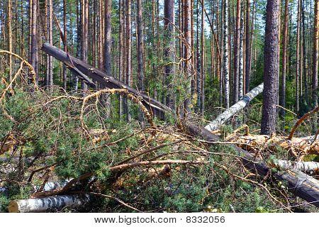 """Gevolgen van de orkaan """"Asta"""" Rusland. De ontwortelde bomen en de tuimelde naar beneden steun voor lijnen el"""