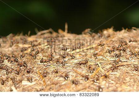 ants nest close up