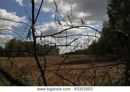 Clearing under way in the Khimki forest near the camp of the defenders of the Khimki forest