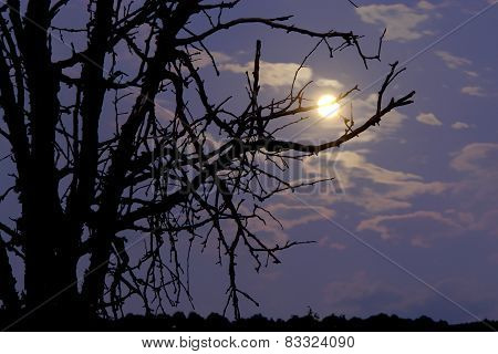 Moon shines through the branches silhouette