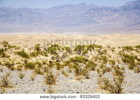 Sand Dunes Of Mesquite Flats Desert, Death Valley