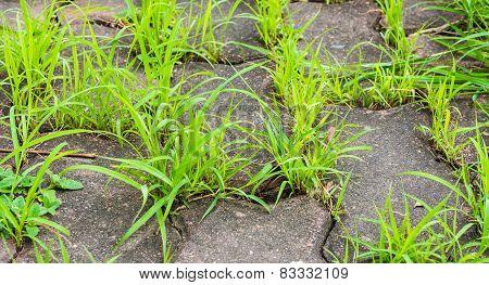 Grass And Sidewalk