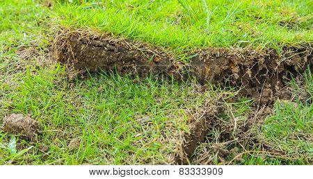 Green Grass Sheet