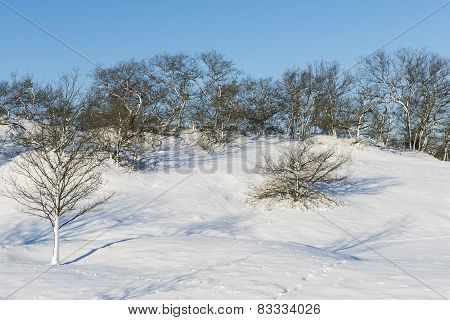 Small Snow Hills And Trees
