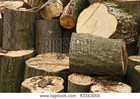 Heap Of Big Hornbeam Chopped Logs
