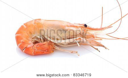 Giant Malaysian Prawn On White