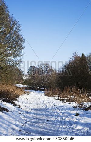 Trees in Frozen Winter Landscape