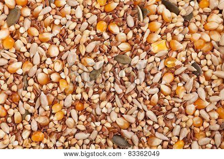 Organic Seeds: Corn, Sesame, Flax, Buckwheat, Wheat, Rice, Pumpkin Seed