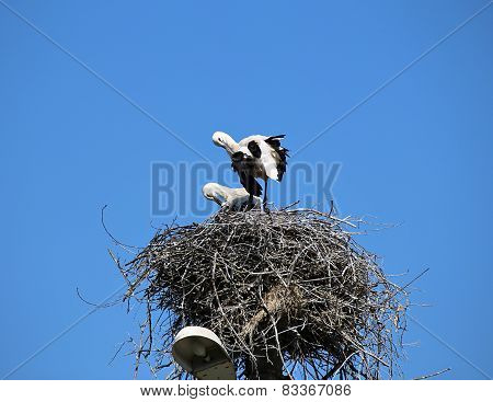 Pair Of Storks In The Nest On A Pillar