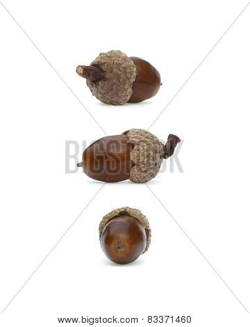 Three Brown Acorns
