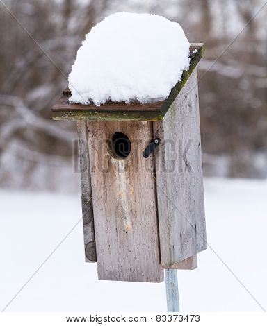 Bluebird House After A Snowfall