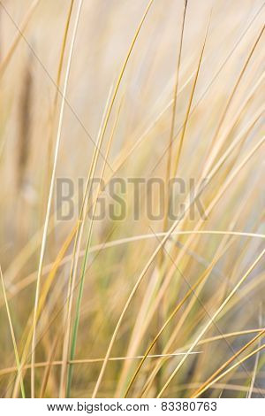 Beautiful Dry Grass And Bent Background