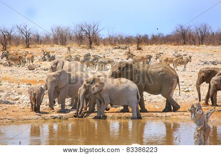 Elephants and zebras at a waterhole