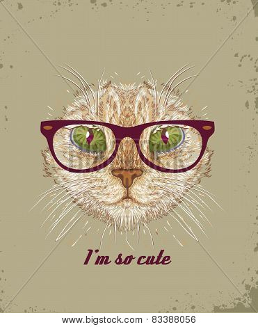 Cat with glasses.