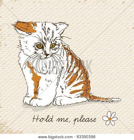 Sad cat sitting.