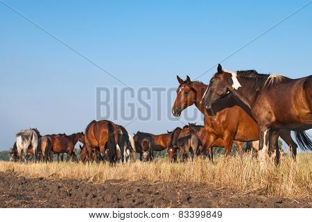 Herd of beautiful different horses standing in a field, grazing against the blue sky.