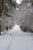 stock photo of bohemia  - snowy forest road in South Bohemia - JPG