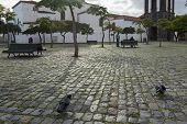 picture of bench  - Market place in Santa Cruz de Teberife with benches trees pigeons and man on benche - JPG