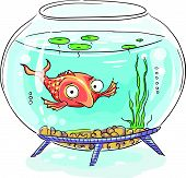 stock photo of fishbowl  - Big - JPG