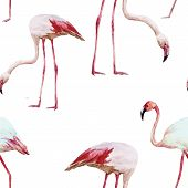 foto of flamingo  - Beautiful vector watercolor pattern with nice flamingos - JPG