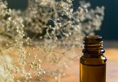 stock photo of small-flower  - Essence bottle and small white flowers on wooden table.