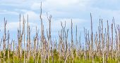 pic of swamps  - swamp area with dead trees in the everglades under cloudy sky - JPG