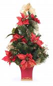 foto of poinsettia  - Christmas Tree with Poinsettias isolated on white background - JPG