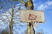 stock photo of primitive  - Basketball hoop primitive board with broken net on tree in city park - JPG