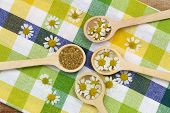 picture of chamomile  - Fresh chamomile flowers and dried chamomile flowers on wooden spoons on checkered cloth - JPG