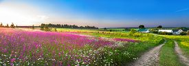 picture of wildflowers  - summer rural landscape panorama with a blossoming meadow the road and a farm - JPG