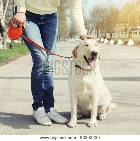 Owner And Happy Labrador Retriever Dog Outdoors Walking In Summer Day