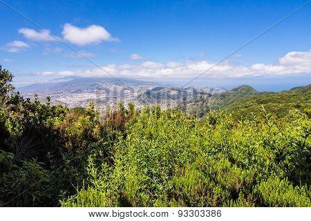 Landscape On The Island Tenerife.