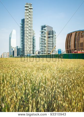 Wheatfield Land Art In Milan