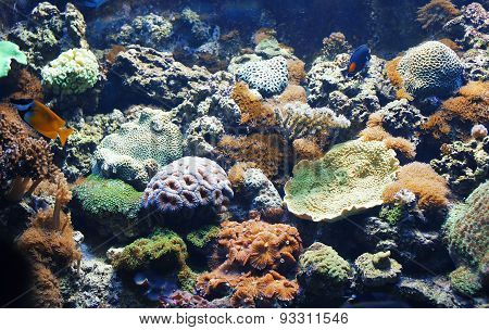 Coral Reefs And Tropical Fishes At The Bottom In The Sunlight