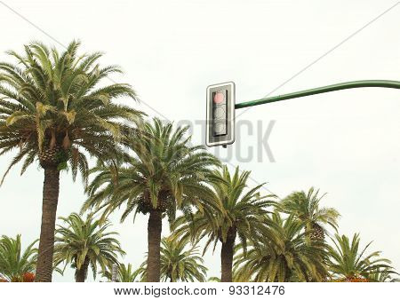 Urban Traffic Light Against The Sky And Palm Trees Near Road