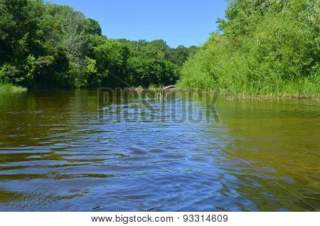 The river and the forest