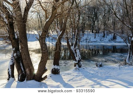 Near Winter Rivulet