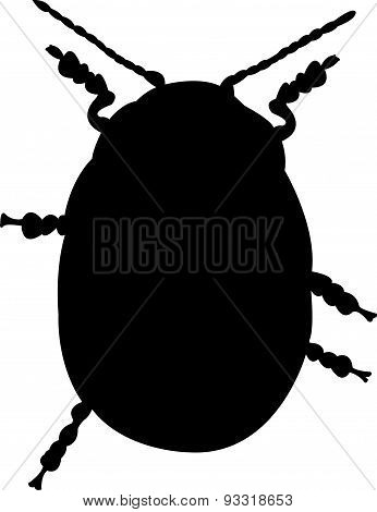 an insect silhouette
