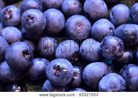 Certified Organic Blueberries, Freshly Picked