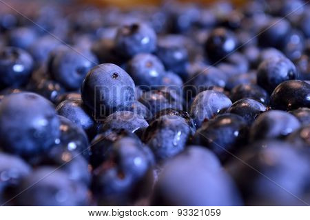 Blueberry Closeup Background
