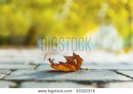 Autumnal leaf on the ground