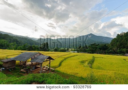 Terraced Rice Field In Chiang Mai Thailand.