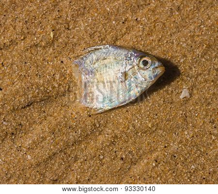 Reef Fish.