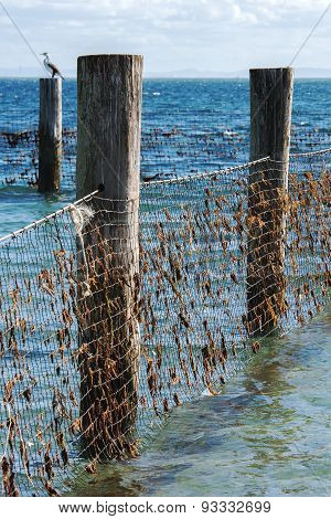 Shark Net in North Stradbroke Island, Queensland.