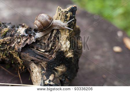 Snail on a log