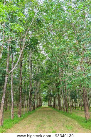 The Rubber Tree Farm.