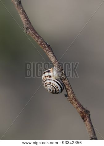 Snail Shell On Branch